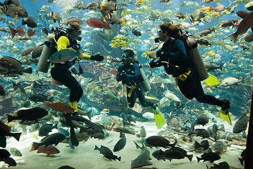 Marine Adventures  at Atlantis, The Palm